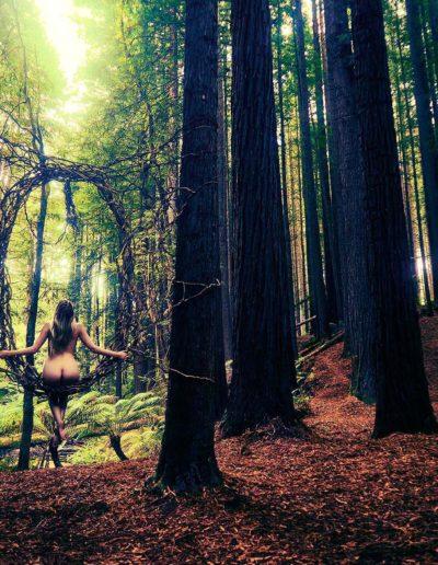 Redwoods-Facebook